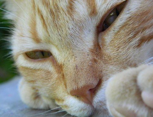 Casos de éxito: Una solución ingeniosa para un problema felino